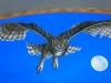 harmon_owl